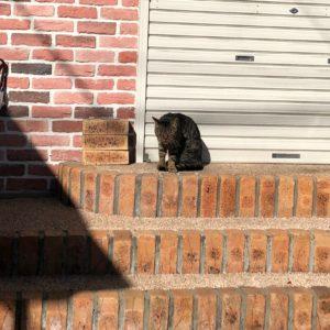 ラベンダーヒルの周りをうろつく猫
